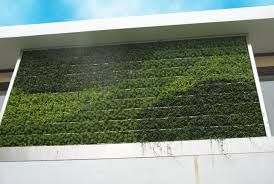 Vertical Gardens Miami - add color to your yard with gsky u0027s succulent green walls and