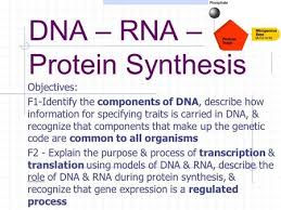 dna rna protein expression interaction ppt download
