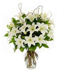 white lillies loving lilies white at from you flowers