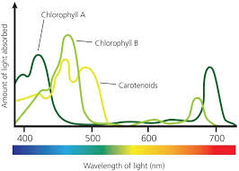 the absorption of light by photosynthetic pigments worksheet answers 493 best chemistry images on pinterest chemistry info graphics
