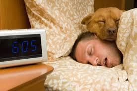 comment empecher mon chien de monter sur le canapé comment empêcher un chien de monter sur le lit 5 é