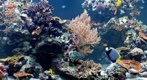 a reef dive at london u0027s natural history museum a view from the