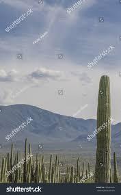 vertical landscape cactus forest biosphere reserve stock photo