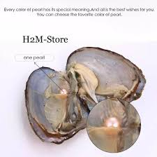 five 5 individually sealed akoya oysters with 6 7mm pearl