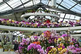 flower garden in amsterdam keukenhof gardens exploring keukenhof tulip gardens