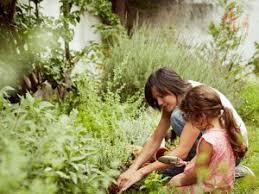 Summer Gardening - preparing for summer gardening grotec landscape solutions