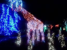 Giraffe Christmas Light Decoration 12 best christmas lights images on pinterest christmas lights