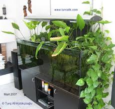 indoor plants for water purification and nitrate reduction in