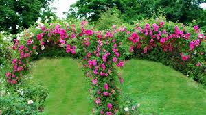 rose garden wallpaper