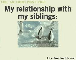 Funny Sibling Memes - 22 gifs that perfectly explain what it s like to have siblings