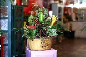 indoor plant arrangements plant arrangement ideas naplanete club