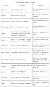 Human Anatomy And Physiology Notes Mammary Gland Google Search Skin Pinterest Mammary Gland