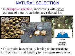 2 1 section objectives u2013 page 35 identify how natural selection