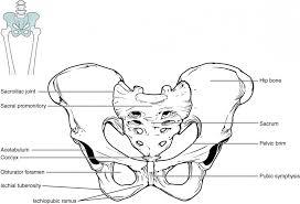 the pelvic girdle and pelvis anatomy and physiology i