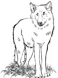 Wolf Color Page Joomla Wolf Pack Coloring Pages