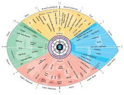 right eye iridology chart iridology eye chart diagnosis