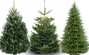 live christmas trees free disposal of live christmas trees at team transfer station