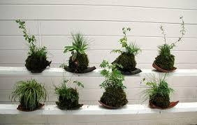 Kokedama, plantas sin macetas.
