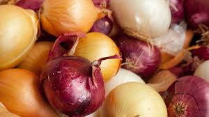 are onions for dogs pets and onions