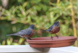 attracting birds to your yard u2013 sib