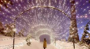 vancouver christmas light maze the top 5 best blogs on christmas lights bc