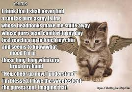 Awesome Quotes About Cats Being - d3f30fa09cee08eb7145e57cde634db9 jpg 736 514 lion pinterest
