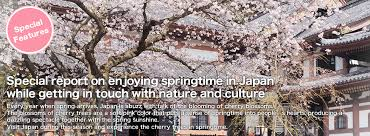 Flowers In Japanese Culture - cherry blossoms sakura features odakyu electric railway