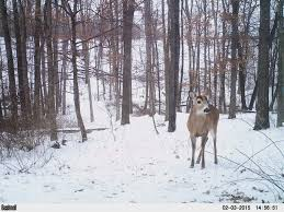 When Do Deer Shed Their Antlers by Shed Hunting The Perfect Closure To Every Bow Hunting Season