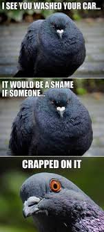 Crazy Bird Meme - birds meme my day