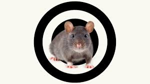 what u0027s the best way to get rid of rats grist