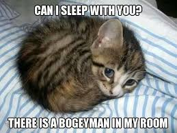 Sleepy Cat Meme - scarried cat meme bogeyman room memes comics pinterest
