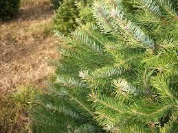 pine valley christmas tree farm christmas lights decoration