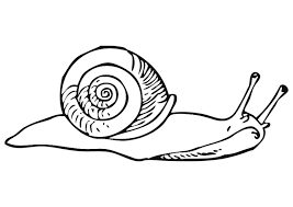coloring snail img coloringeast