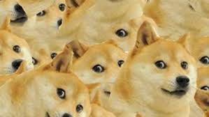 Doge Meme Tumblr - derp doge tumblr