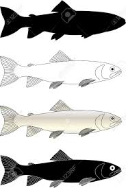 trout fish vector royalty free cliparts vectors and stock