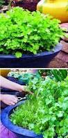 241 best groente tuin images on pinterest gardening vegetable