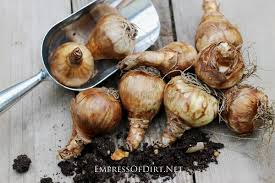 bulbs and seeds to plant in the fall empress of dirt
