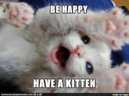 Happy Kitten Meme - happy kitten meme on imgur