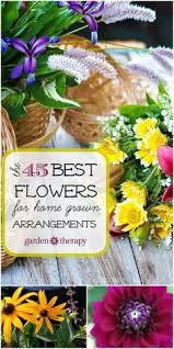 All Types Of Flowers List - 3093 best types of flowers images on pinterest pretty flowers