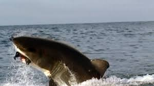 shark search results discovery kids