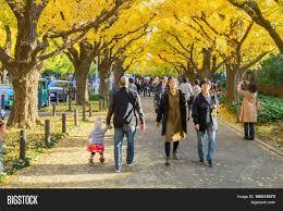 November Tokyo by Tokyo Japan November 20 2016 Many People Walking Under Ginkgo