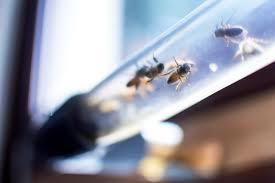 100 hive modular customsmart homes noem at noem we design