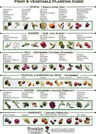 25 beautiful when to plant vegetables ideas on pinterest what