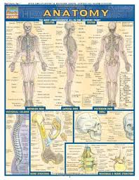Human Anatomy And Physiology Study Guide Pdf Anatomy Quickstudy Reference Guides Academic Inc Barcharts
