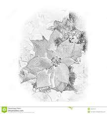 white poinsettia flower decoration stock photos image 333653