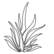 sea plants coloring pages plants world grass coloring pages plants world grass coloring