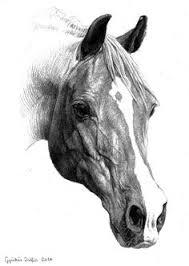 horse art for more great pins go to kaseybellefox art ideas