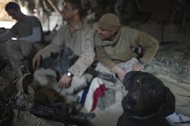 afghan hound art emporium afghanistan dogs of war the atlantic