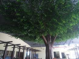 st by31 artificial large banyan trees for restaurant decoration