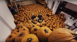 martini pumpkin carving hundreds of pumpkins were carved to make this mesmerising stop